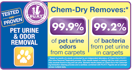 A1 Garden State Chem-Dry removes 99.9% of pet urine odors and 99.2% of bacteria from pet urine in carpets